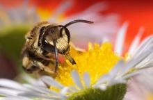 .. bee .. \(0^◇^0)/ 2