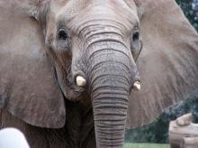 .. สัตว์โลกน่ารัก .. (มากมายค่ะ) (o^.^o)
