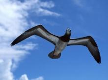 หากฉันบิน ๆ ไปได้ดั่งนก*.:。*゚¨゚・ .。 ♫  ♪