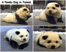 ~Pan Dog~