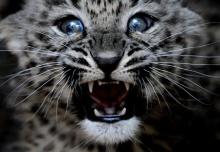 สามทหารเสือ(ดาว) น่ารักมั่กมาก!!