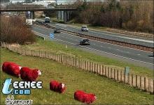 แกะแดงในสกอตแลนด์