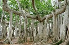 ต้นไม้ต้นใหญ่ๆ!!