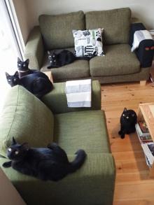 คาเฟ่แมวดำที่ญี่ปุ่น