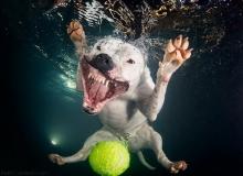 เมื่อน้องหมาพยายามงับลูกบอลในน้ำ…ภาพฮาๆ จึงบังเกิด