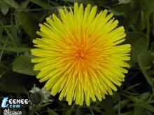 ดอกไม้...สุดสวย2