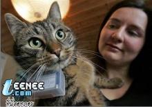 จับแมวมาเป็นตากล้องแล้วคุณจะได้ภาพที่ไม่เคยเห็น