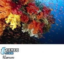 ปะการัง...สิ่งมีชีวิตที่น่าค้นหา