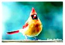 นก...สีสันของธรรมชาติ