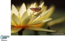 Macro สวย สวย มา แล้วครับ ขอบคุณรูปสวย สวย จาก CM108 .com