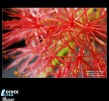 บรรยากาศสบายสบาย......ดอกไม้สวยสวย......กับคนใสใส(ถ้ามี อ่ะนะ).......ขอบคุณดอกไม้สวยสวยจาก CM1o8.c0m