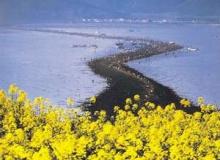 ปาฏิหาริย์โมเสส ทะเลแยกที่เกาหลีใต้!!!