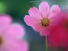 สดชื่นกันหน่อย กับดอกไม้สวย