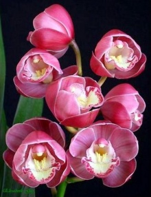Just a Orchid