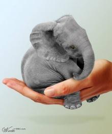 = ชอ. ช้าง น่ารักจริงๆ=(saki)