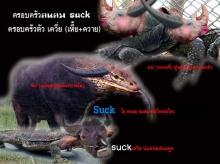 ไอsuck คนคมอ่ะ ๆ อย่ามาโชว์ควายแถวนี้ เว็บอันดับ 4ของประเทศไทยเขาเสียหายเพาะความจัญไรของมรึ งหมด