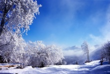 Beautiful Winter 2