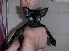 จับแมวมาล้างน้ำ