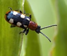 ความหลากหลายของแมลง # 1