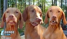 3พี่น้อง ขอรับบริจาคทรัพย์ เพื่อใส่เหล็กดัดฟัน''มันจำเป็น