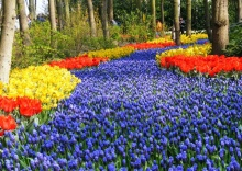 Keukenhof Garden Holland # 2