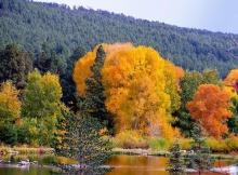 ป่า....เปลี่ยนสี