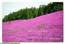 ภูเขาสีชมพู(เห็นเค้าว่าก้อว่าตามกัน)