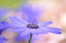 ดอกไม้โฟกัสนุ่มๆ 2