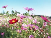 Wallpaper ดอกไม้ สวยๆ