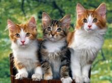 แสนซน น่ารักอย่างแมว