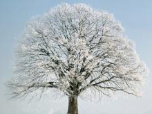 ธรรมชาติ.... อันเหน็บหนาว
