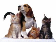 --[น้องแมว&น้องแมว-1]--