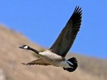 หากฉันบิน ๆ ไปได้ดั่งนก*.:。*゚¨゚・ .。 ♫  ♪ 2