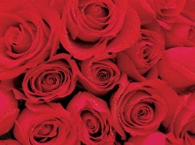 Roses_Symbol of Indispensable Love .•°•.° ღღღ Part 2