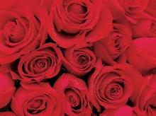 Roses_Symbol of Indispensable Love .•°•.° ღღღ Part 2