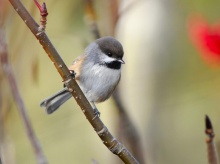 Lively Tiny Birds ●•.•°•.° (o^.^o)