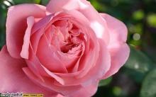 ( ⊙ o ⊙ ) แจกภาพดอกไม้สวยๆจ้า คลิกเล้ย!!~~~→ ~~