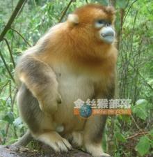 ลิงน้อย น่ารัก