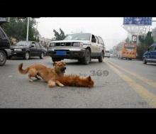 ความรักของหมา..ข้างถนน (2)