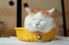 แมวชิโร่กับสมาชิกในครอบครัว นอนหลับน่ารักเชียว