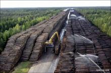 ค้าไม้ที่ใหญ่ที่สุดในภาคใต้ของสวีเดน