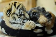 ความน่ารักของสัตว์โลก