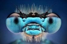 ส่องดวงตาแมลง แบบประชิด