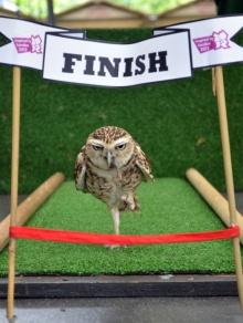 คอลเลคชั่น รูปถ่ายสัตว์โลก ยอดเยี่ยมแห่งปี 2012