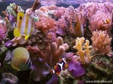 โลกของปะการัง