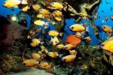 แนวปะการังรถยนต์ใต้ทะเลลึก