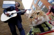 บ๊อบ-แมวดังข้างถนน