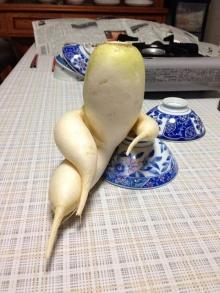 ผัก ผลไม้ รูปร่างประหลาด แบบนี้ก็มีด้วย!