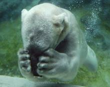 ภาพขำๆ แบบสัตว์โลกน่ารัก