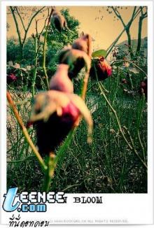 Lomo : In Bloom